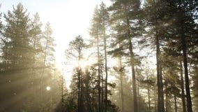 Nebelhafter Wald stock footage