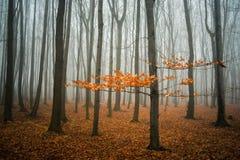 Nebelhafter Wald Lizenzfreies Stockfoto