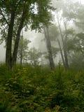 Nebelhafter Wald Stockbild