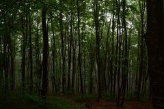 Nebelhafter Wald Lizenzfreie Stockfotografie