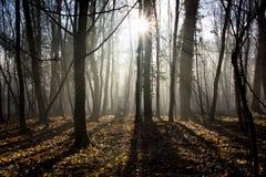 Nebelhafter Wald Lizenzfreie Stockbilder