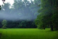 Nebelhafter Wald am Abend Stockfotos