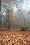 Nebelhafter Wald des Herbstes Lizenzfreie Stockfotos