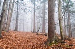 Nebelhafter Wald im Herbst mit trockenen Blättern im Boden Lizenzfreies Stockfoto