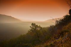 Nebelhafter Wald in Istria Stockfoto