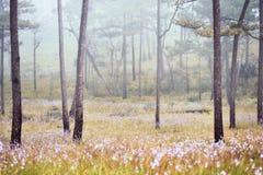 Nebelhafter Wald mit Blumen Stockfotos