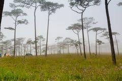 Nebelhafter Wald mit Blumen Lizenzfreie Stockfotografie