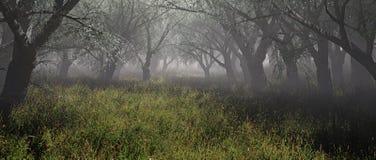 Nebelhafter Wald mit Gras Lizenzfreie Stockfotos