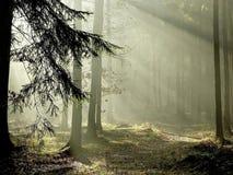 Nebelhafter Wald mit Sonnestrahlen des frühen Morgens Lizenzfreies Stockfoto