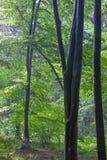 Nebelhafter Wald am Morgen Lizenzfreie Stockfotografie