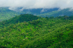 Nebelhafter Wald morgens. Lizenzfreie Stockfotos
