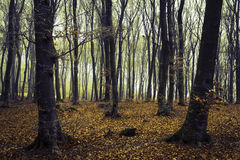 Nebelhafter Wald nach Regen Stockbild