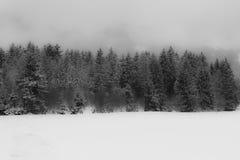 Nebelhafter Wald Schwarzweiss Stockfoto
