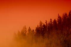 Nebelhafter Wald am Sonnenuntergang Stockfoto