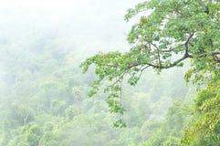 Nebelhafter Wald, Thailand Lizenzfreie Stockbilder