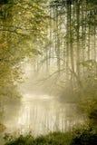Nebelhafter Waldfluß mit Sonne des frühen Morgens rays Lizenzfreie Stockfotografie