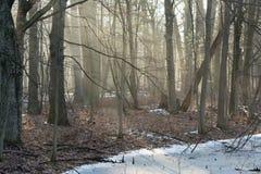 Nebelhafter Waldmorgen Lizenzfreies Stockbild