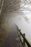 Nebelhafter Waldpfad Lizenzfreie Stockbilder