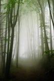 Nebelhafter Waldpfad Stockfotos