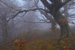 Nebelhafter Waldschutz Stockbild