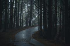Nebelhafter Waldweg Stockfoto