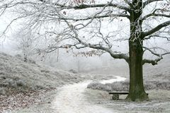 Nebelhafter winterlicher Landschafts- und Eichenbaum Lizenzfreies Stockfoto