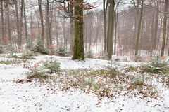 Nebelhafter Winterwald Stockfotografie