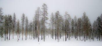 Nebelhafter Winterwald Stockfotos
