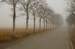 Nebelhaftes Aveneu Lizenzfreies Stockfoto