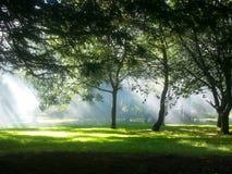 Nebelhaftes Grün Stockfotos