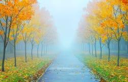 Nebelhaftes Herbstmorgen ater der Regen stockbilder