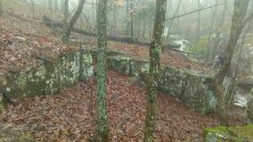 Nebelhaftes Holz stockfoto