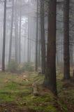 Nebelhaftes Holz. Lizenzfreies Stockfoto