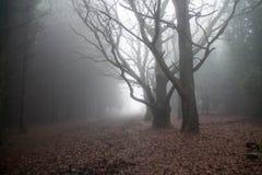 Nebelhaftes Holz stockbild