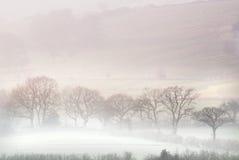 Nebelhaftes Tal Stockbild