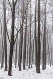 Nebelhaftes Winterholz am Morgen Stockbild