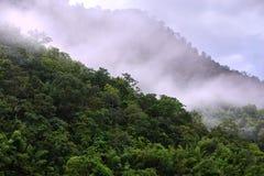 Nebelig im Wald auf Morgen stockfotografie