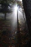 Nebelige Bäume Lizenzfreies Stockfoto