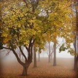 Nebelige Bäume Stockfotografie