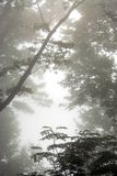 Nebelige Bäume Lizenzfreie Stockfotografie
