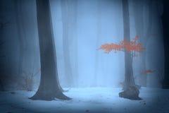 Nebelige Bäume des Waldes während des Winters Lizenzfreies Stockfoto