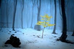 Nebelige Bäume des Waldes während des Winters Stockfotos