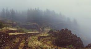 Nebelige cobbled Straße unter landwirtschaftlichen Terrassen in Richtung zum mysteriösen Kiefernwald regnerisch und zum dunstigen stockbild