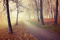 Nebelige Gasse des Herbstes - parken Sie Herbstlandschaft im Nebel Stockfoto
