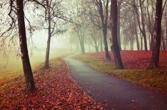 Nebelige Gasse des Herbstes - parken Sie Herbstlandschaft im Nebel Stockbild