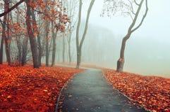 Nebelige Gasse des Herbstes - Parkherbstlandschaft Herbstparkgasse im dichten Nebel Lizenzfreie Stockfotos