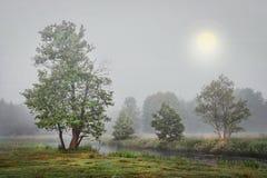 Nebelige Herbstlandschaft von Bäumen auf Flussbank am grauen kalten Morgen Stockbild