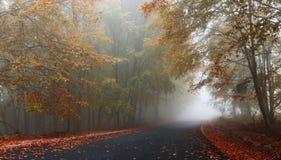Nebelige Herbststraße Stockbilder