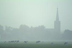Nebelige holländische Landschaft mit Kühen und einer Kirche Stockfotografie