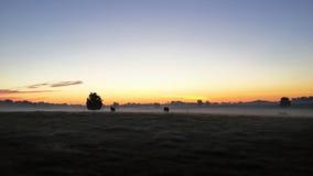 Nebelige Kuhweide bei Sonnenaufgang Lizenzfreies Stockfoto